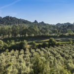 Provence Wine Tour - from Cannes and Fréjus-Saint Raphaël