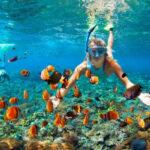 SARDINAUX EVASION ECA Snorkeling
