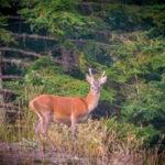 The Deer's slab - Hike in the Esterel