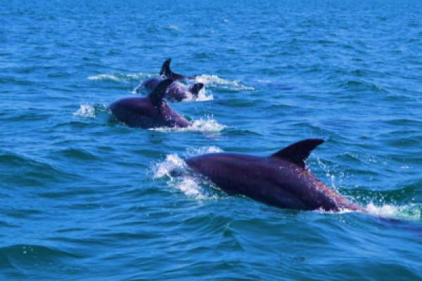 Dolphin Tour Ria formosa