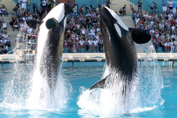 Spectacles Dorques Marineland Antibes