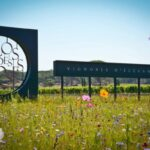 Clos des Roses - Guided Tour & Commented wine tasting