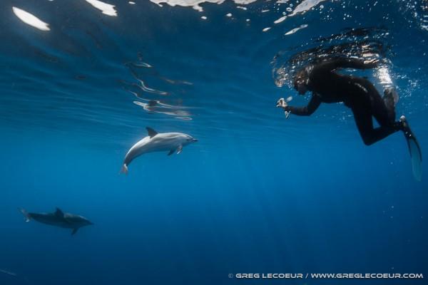 Navire Moguntia – Meet the dolphins