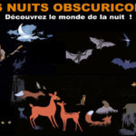 Obscuricolar Nights : guided tour of the cave & naturalist walk