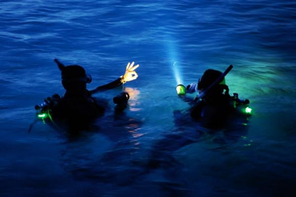 plongée nuit Alpha Beluga Fréjus