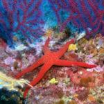 Baptême Découverte Plongée sous-marine 30mn Fréjus