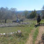 """Balade à Cheval """"Le champ des oliviers"""" 1h"""