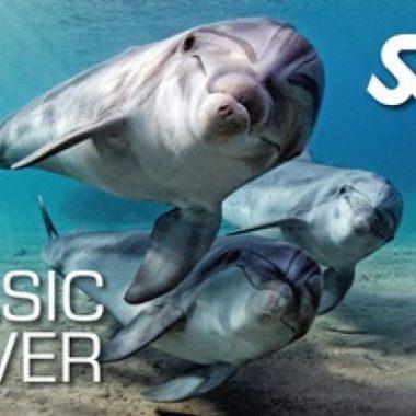Basic diver SSI/Initiation à la plongée