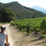 Le Vignoble à Vélo (assistance éléctrique)
