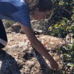 Randonnée et découverte des plantes sauvages comestibles à Mandelieu