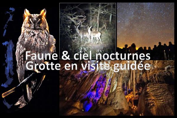 Visite guidée grotte + faune et ciel nocturnes