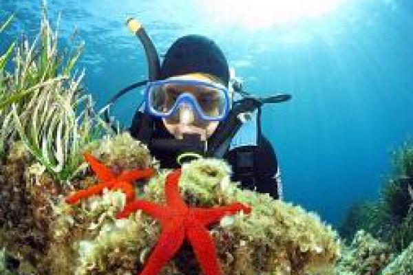 Découverte de l'environnement marin et de ses espèces