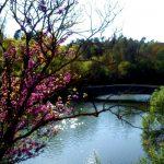 le pont de la réserve de Fondurane balade à cheval